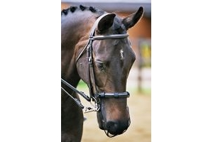 equilibrium Relief Pony Muzzle Net - Black