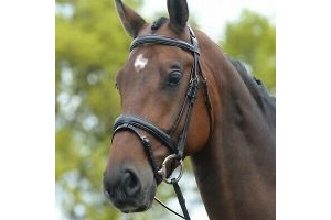 Kincade Padded Headpiece Flash Bridle - Black -Cob Size, Comes with Rubber Reins