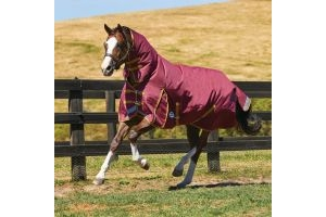WeatherBeeta ComFiTec Plus Dynamic 220g Medium Weight Combo Turnout Rug Burgundy/Gold