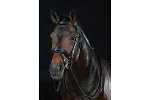 Collegiate Padded Headpiece Patent Flash Bridle
