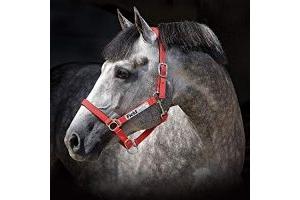 Horseware Fieldsafe Headcollar Red Full
