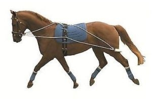 Horse Cob Pony Youngster Kincade Lunging System Not Pessoa Training Aid Balance