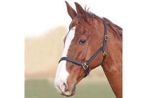 Shires Blenheim Ragley Lined Leather Headcollar-Black Pony