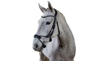 GFS Premier Alpine Bridle Black