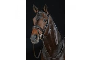 Collegiate Padded Shped Raised Noseband Flash Bridle