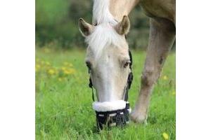 Shires Deluxe Comfort Grazing Muzzle: Black: Pony