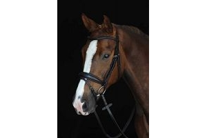 Collegiate Mono Crown Padded Raised Flash Snaffle Bridle Warmblood Black