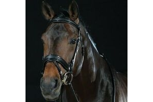 Collegiate Padded Headpiece Patent Flash Bridle - Black Full