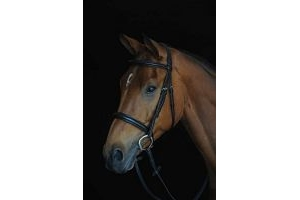 Collegiate Comfort Crown Padded Raised Cavesson Bridle - Brown: Cob