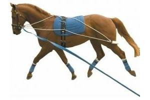 Kincade Lunging Training System