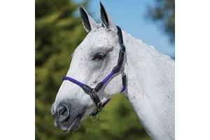Kincade Leather Rope Headcollar Purple Pony
