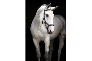 Horseware Ireland Rambo Micklem Deluxe Competition Bridle English Leather [Dark Havana] [Small Horse] SBAB6F