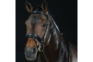 Collegiate Padded Headpiece Patent Flash Bridle-Black-Warmblood