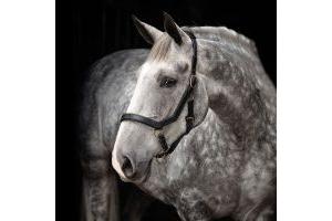Horseware Rambo Micklem Headcollar