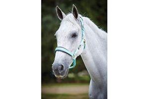 Roma Brights Pony/Horse Headcollar: Aqua: Warmblood
