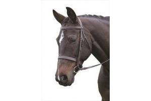 Kincade Hunt Cavesson Bridle with Reins-Warm Blood Brown