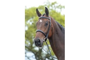 Kincade Raised Cavesson Bridle(Black, Warmblood)