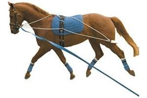 Kincade Lunging Training System based on PESSOA Training Aid 1 Size