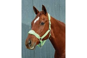 Roma Fleece Shaped Headcollar Lime Full