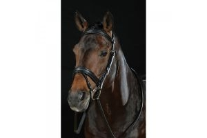Collegiate Padded Headpiece Flash Bridle II