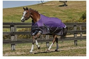 Weatherbeeta Comfitec Medium Plus Dynamic Standard Neck Turnout Rug (6 ft 3) (Purple/Black)
