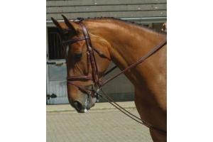John Whitaker Horses Training Reins