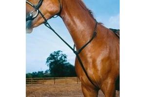 SALE - Horse Riding Standing Martingale (Blenheim) Leather -  Havana -  COB