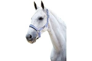 Roma Pastel Headcollar Lavender/Black Pony