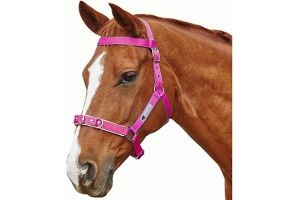 Kincade Brights Nylon Padded Lunge Cavesson Cob Hot Pink