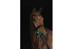 Collegiate Mono Crown Padded Raised Weymouth Bridle Brown Cob