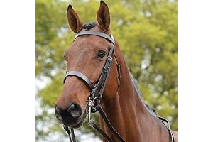 Kincade Leather Show Weymouth Bridle II (Warmblood) (Brown)