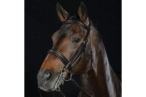 Collegiate Padded Headpiece Raised Weymouth Bridle Warmblood Brown