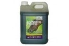 Global Herbs Laminitis Prone for Horses - Liquid - 5 litre Bottle