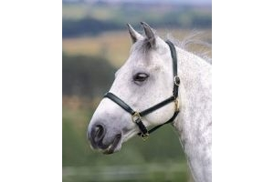 Shires Ragley Lined Leather Headcollar: Black: Extra Full