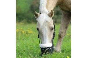 New SHIRES Deluxe Comfort GRAZING MUZZLE Black FULL SIZE