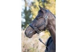 LeMieux Anatomic Leather Headcollar: Black: Cob