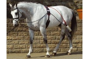 John Whitaker Complete Training Horses System with Roller
