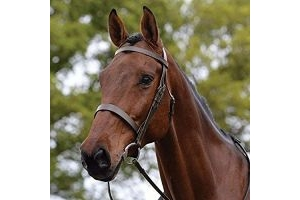 Kincade Hunt Leather Cavesson Bridle II (Warmblood) (Brown)