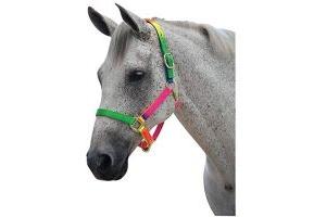 Roma Rainbow Pony/Horse Headcollar: Pony