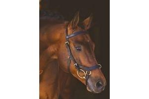 Horseware Rambo Micklem Multibridle X Full Black