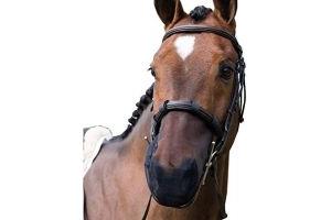 equilibrium Relief Cob/Horse Muzzle Net - Black