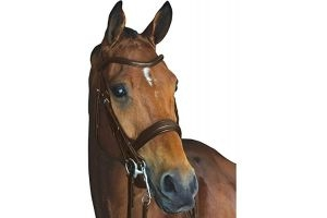 Collegiate Mono Crown Padded Raised Leather Weymouth Bridle (Warmblood) (Brown)