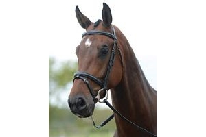 Kincade Flash Bridle(Black, Cob)