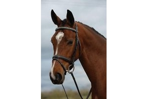 Kincade Padded Crystal Crank Flash Bridle - Brown: Full