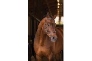 Horseware Rambo Micklem Multi Bridle