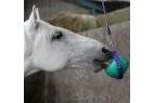 Likit Boredom Buster for Horses - Purple/Green