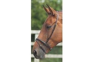 Shires Equestrian - Blenheim Flash Noseband - Black - Size: Pony