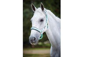 Roma Brights Pony/Horse Headcollar: Aqua: Full