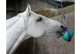 Likit Boredom Buster for Horses - Purple/Lilac