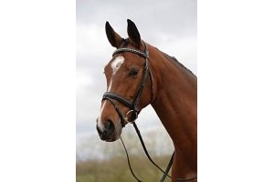 Kincade Padded Crystal Crank Flash Bridle - Black: Cob